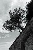 sosny skały sylwetki drzewo Obrazy Stock