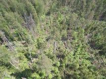Sosny Spadali opłata huragan, fotografia od truteń anteny krajobrazu Zdjęcia Royalty Free