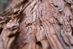 Sosny tekstury korowatego tła antycznej sosny stara cedrowa klonowa świerczyna Zdjęcie Stock