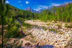 Sosny w Col De Bavella górach blisko Zonza, Corsica wyspa, Francja, Europa zdjęcie stock