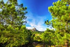 Sosny w Col De Bavella górach, Corsica wyspa, Francja, zdjęcia royalty free