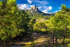 Sosny w Col De Bavella górach, Corsica wyspa, Francja, zdjęcie stock