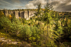 Sosny w jesieni scenerii Fotografia Stock