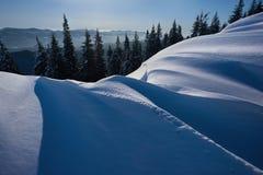Sosny zakrywać z śniegiem w blask księżyca fotografia royalty free