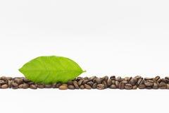 Sosowane kawowe fasole i zielony liść Zdjęcia Royalty Free