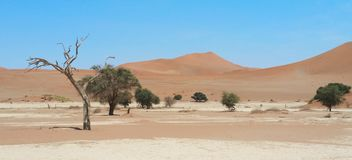 Sossus Vlei. In the Namib Desert Royalty Free Stock Photo