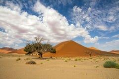 Sossusveli desert, dune 45, Namibia. The red sand dunes 45 of Sossusvlei desert, Namibia Stock Image