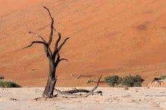 Sossusvlei,纳米比亚 免版税库存图片