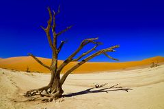 Sossusvlei,纳米比亚 库存图片