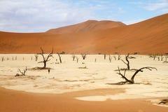 Sossusvlei öken, Namibia royaltyfri fotografi
