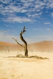 Sossusvlei öken, Namibia royaltyfria foton