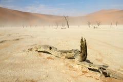 Sossusvlei öken, Namibia arkivfoto