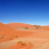 Sossusvlei, εθνικό πάρκο Namib Naukluft, Ναμίμπια Στοκ εικόνες με δικαίωμα ελεύθερης χρήσης