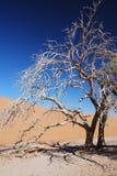 sossusvlei Намибии Стоковое фото RF