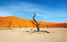 sossusvlei Намибии namib пустыни Стоковые Фотографии RF