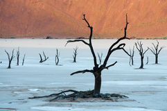 Sossusvlei. Dead trees in the Dead Valley in Namibia Royalty Free Stock Photo