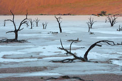 Sossusvlei. Dead trees in the Dead Valley in Namibia Stock Photo