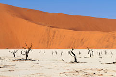 Sossusvlei area in Namibia Stock Image