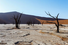 Sossusvlei beautiful landscape of death valley, namibia Stock Photo
