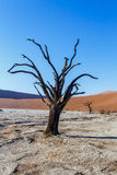 Sossusvlei beautiful landscape of death valley, namibia Royalty Free Stock Photography