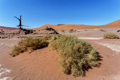 Sossusvlei beautiful landscape of death valley, namibia Royalty Free Stock Images