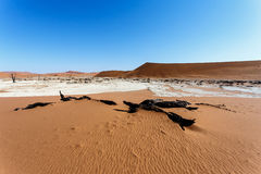 Sossusvlei beautiful landscape of death valley, namibia Stock Photos