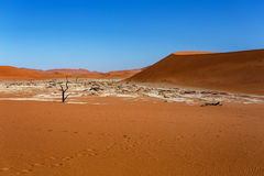 Sossusvlei beautiful landscape of death valley. Sossusvlei beautiful sunrise landscape of hidden death valley in Namibian desert with blue sky, best place in Royalty Free Stock Images