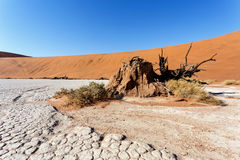 Sossusvlei beautiful landscape of death valley. Sossusvlei beautiful sunrise landscape of hidden death valley in Namibian desert with blue sky, best place in Royalty Free Stock Image