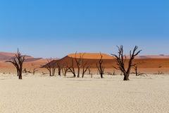 Sossusvlei beautiful landscape of death valley Stock Photography