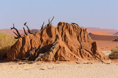 Sossusvlei beautiful landscape of death valley Stock Images
