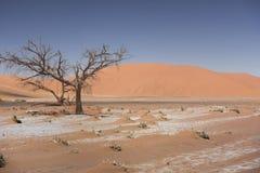 Sossusvlei dans le désert de Namib, Namibie Photo stock