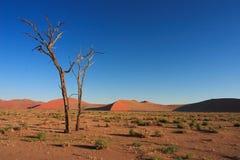Sossusvlei in de Woestijn Namib Stock Foto