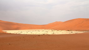 Sossusvlei: dead acacia trees. In the Namib Desert, Namibia royalty free stock images