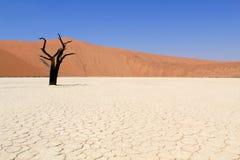 Sossusvlei Dead Valley Landscape In The Nanib Desert Near Sesriem Stock Photo