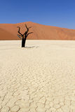 Sossusvlei dead valley landscape. Nanib desert Royalty Free Stock Photos