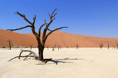Sossusvlei dead valley landscape. Nanib desert. Sossusvlei dead valley landscape in the Nanib desert near Sesriem, Namibia Stock Photo