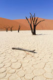 Sossusvlei dead valley landscape. Nanib desert Stock Photos