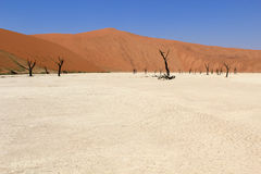 Sossusvlei dead valley landscape in the Nanib desert near Sesrie Stock Images