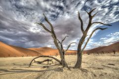 Sossusvlei Deadvlei trees, dunes. A big old and dead acacia tree in the foreground by Deadvlei, Sossusvlei with red dunes in the background. This is in the Namib royalty free stock photography