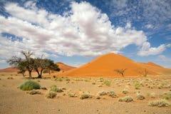 Sossusvlei desert, dune 45, Namibia. The red sand dunes 45 of Sossusvlei desert, Namibia Royalty Free Stock Photos