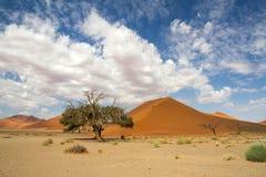 Sossusvlei desert, dune 45, Namibia. The red sand dunes 45 of Sossusvlei desert, Namibia Royalty Free Stock Images