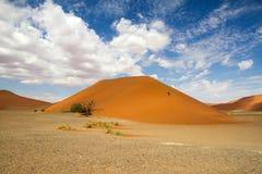 Sossusvlei desert, dune 45, Namibia. The red sand dunes 45 of Sossusvlei desert, Namibia Stock Images