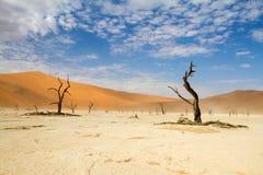 Sossusvlei desert, Namibia. Dead trees in the Sossusvlei desert, Namibia Stock Photography
