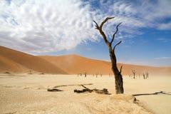 Sossusvlei desert, Namibia. Dead trees in the Sossusvlei desert, Namibia stock image