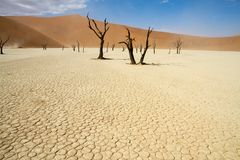 Sossusvlei desert, Namibia. Dead trees in the Sossusvlei desert, Namibia Royalty Free Stock Photo