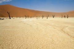Sossusvlei desert, Namibia. Dead trees in the Sossusvlei desert, Namibia royalty free stock photo