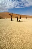 Sossusvlei desert, Namibia. Dead trees and dry mud in the Sossusvlei desert, Namibia royalty free stock image