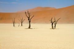 Sossusvlei desert, Namibia. Dead trees between the red dunes of Sossusvlei desert, Namibia royalty free stock images