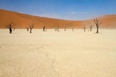 Sossusvlei desert, Namibia. Dead trees between the red dunes of Sossusvlei desert, Namibia royalty free stock photo