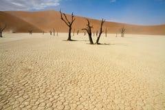 Sossusvlei desert, Namibia. Dead trees between the red dunes of Sossusvlei desert, Namibia royalty free stock image